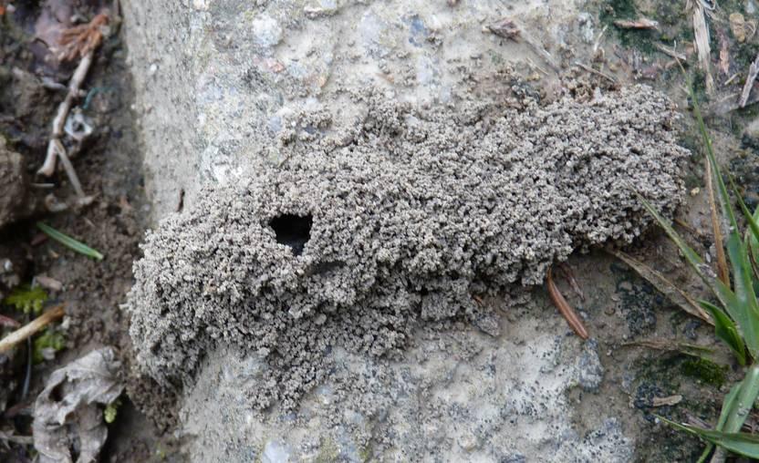 Túnel exterior de formigues